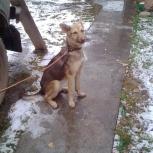 Очаровательный щенок ищет дом, Новосибирск