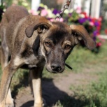щенок Вовочка, Новосибирск