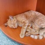 Найден котенок рыжего цвета, Новосибирск