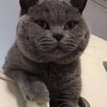 Пропал кот!, Новосибирск