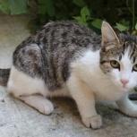 Найдена кошка!, Новосибирск
