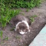 найден кот на березовой роще, Новосибирск