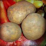 Продам картофель, Новосибирск
