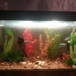 Продам аквариум с обитателями, Новосибирск