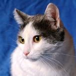 Тихон ♥ ласковый котик в поисках дома, Новосибирск