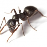 Клопы, тараканы, муравьи, Новосибирск