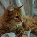 Ласковый кот Гриша, Новосибирск