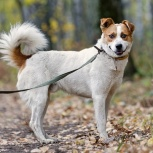 Бесподобный пес Эдик ищет дом, Новосибирск