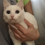 Подобрали кошечку, Новосибирск