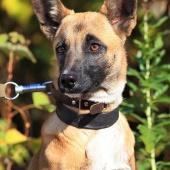 Красивая и благородная собака Джесси!, Новосибирск
