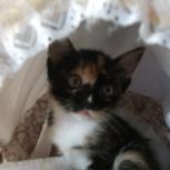 Отдам очень красивеньких котят бесплатно, Новосибирск