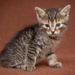 Очаровательные котята - непоседы ищут родителей, Новосибирск