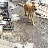 В Первомайском р-не ., 22 февраля потерялся пёсик, дворняжка, Новосибирск