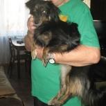 собака Лапуша, 1,5 года, ищет новых хозяев, Новосибирск