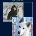 Собака белая швейцарская овчарка, Новосибирск