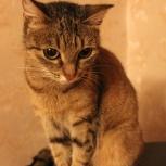 Классическая кошка с нестандартным именем - Мать., Новосибирск