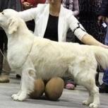 Груминг (стрижка собак), Новосибирск