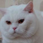 Кот приглашает кошек, Новосибирск