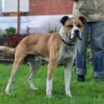 Собака Бакс ищет дом, Новосибирск