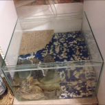 Черепахи с террариумом, Новосибирск
