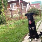 Чудесный пес, Новосибирск