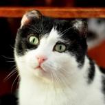 Знакомьтесь: кот кузьма батькович, Новосибирск