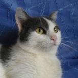 Зевс -красивый воспитанный кот, Новосибирск