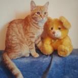 Рыжий котенок Артемка 9 месяцев, Новосибирск