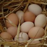 Продам яйцо домашнее, Новосибирск