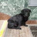 Найдена собака. Чёрный кобель. С ошейником. Метро Берёзовая роща, Новосибирск