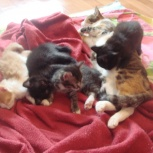 Отдам котят малышей в добрые и заботливые руки, Новосибирск
