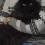 Потерялся кот, Новосибирск