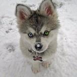 Передержка для воспитанной собаки без вольера и клеток, Новосибирск