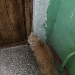 Найден котик, Новосибирск