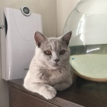 Отдам даром котика 8,5 месяцев, Новосибирск