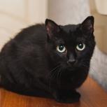 Чёрная молоденькая кошечка. Стерилизована, Новосибирск