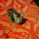 Котёнок в добрые руки!, Новосибирск