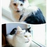 Милейший котик Васенька ищет дом, Новосибирск