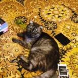 Кошечка ищет жениха на одну ночь)))), Новосибирск