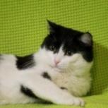 Необыкновенный Котя, Новосибирск