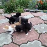 Три черных и Рыжий (котята), Новосибирск