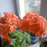 Цветы для интерьера, Новосибирск