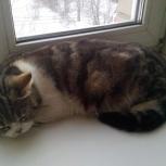 Найдена кошечка в подъезде, приморье., Новосибирск