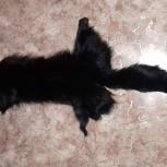 Продам лису крашеную черную, Новосибирск