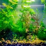 Аквариум 8л. с рыбками, креветками, растениями Итд, Новосибирск