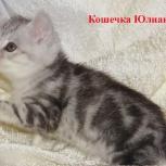 Котята, серебро на букву Ю, Новосибирск