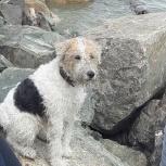 Потерялась собака, Новосибирск
