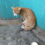 В подьезде тусуется кот, Новосибирск