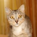 Необычная и харизматичная кошка Лукерья, Новосибирск