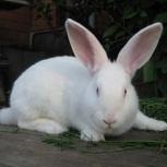 Продам крольчат, Новосибирск